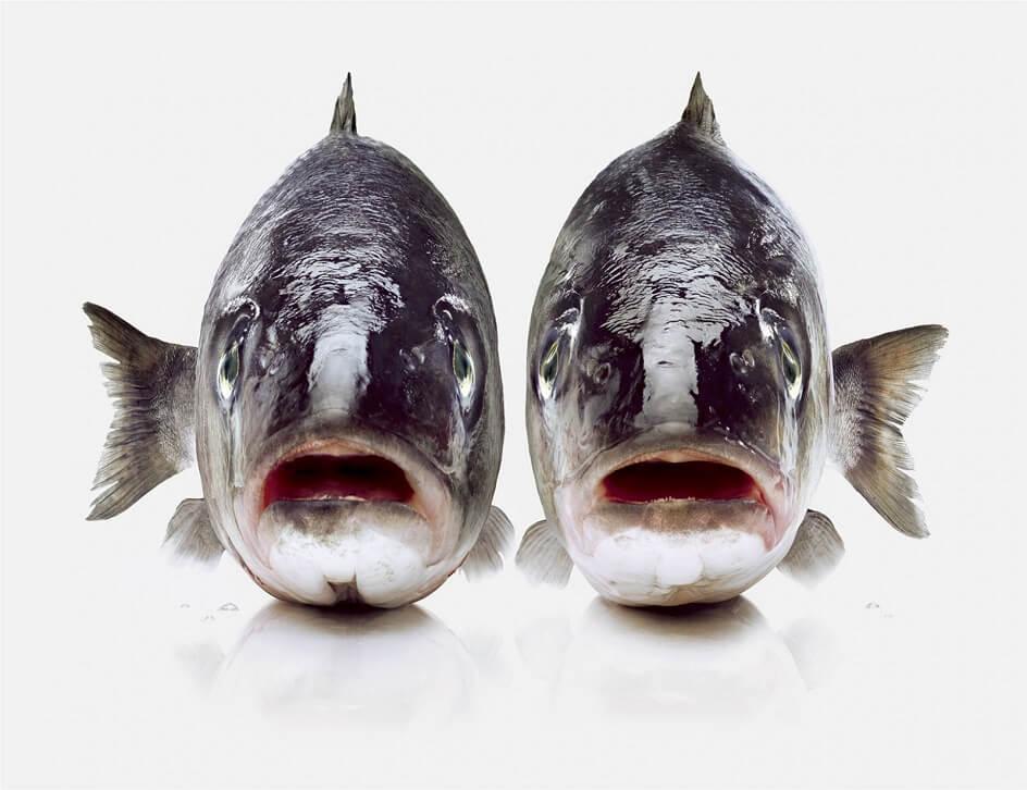 Мауро Туратти. Фотография «Рыбы» из серии «Зодиак»
